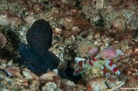 Anilao14_Red_Rock_044